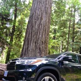 2014 Toyota Highlander in the Redwood Forest