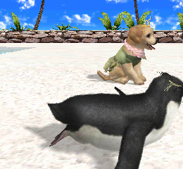 Petz Beach 3DS Review Dog and penguin Screen Shot