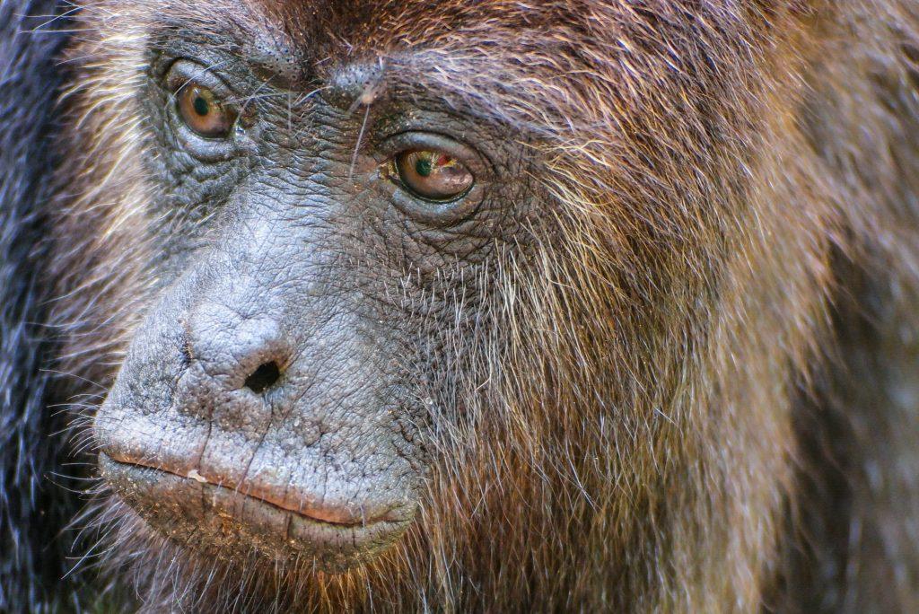Belize Travel Story Howler Monkey Excursion