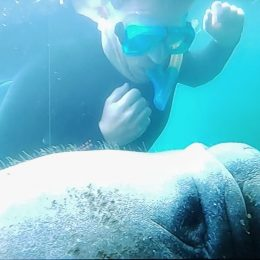 What It Feels Like To Swim with Manatees in Crystal River, Florida