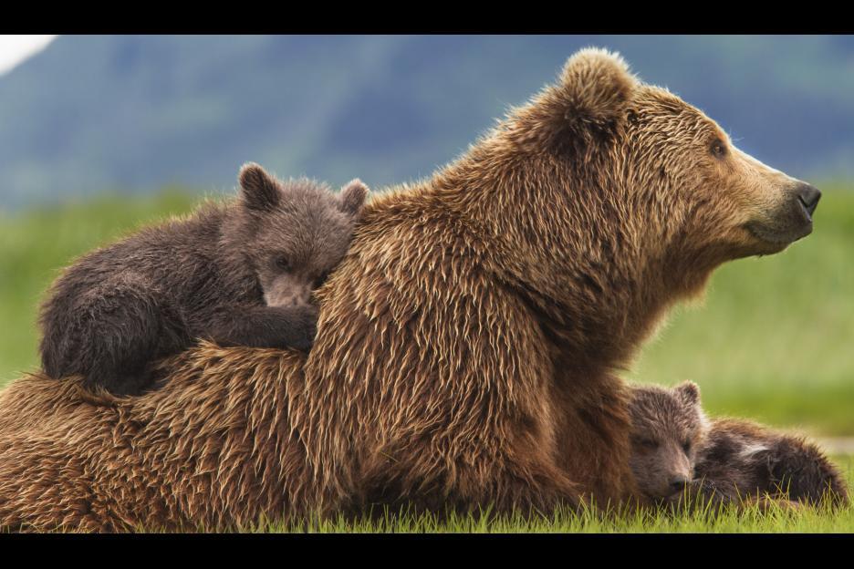 Disneynature Bears Screenshot Mother and Baby Bears