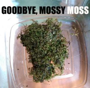 Goodbye, Mossy Moss