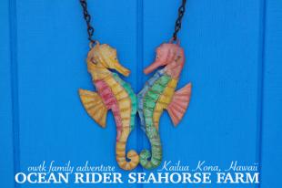 American Family Adventures: Ocean Rider Seahorse Farm In Kailua Kona Hawaii