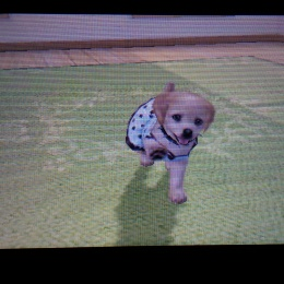 Meet Idaho the dog iN Petz Beach 3DS