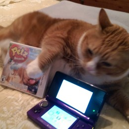 OWTK Petz Beach 3DS Review with Tabby Cat