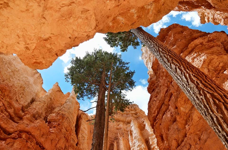 Bryce Canyon National Park Looking Up