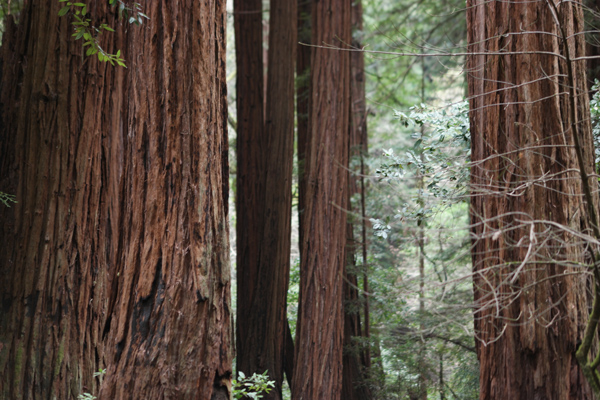 13-Travel-Experience-Kids-Should-Have-Before-They-Grow-Up_Redwoods-Trees