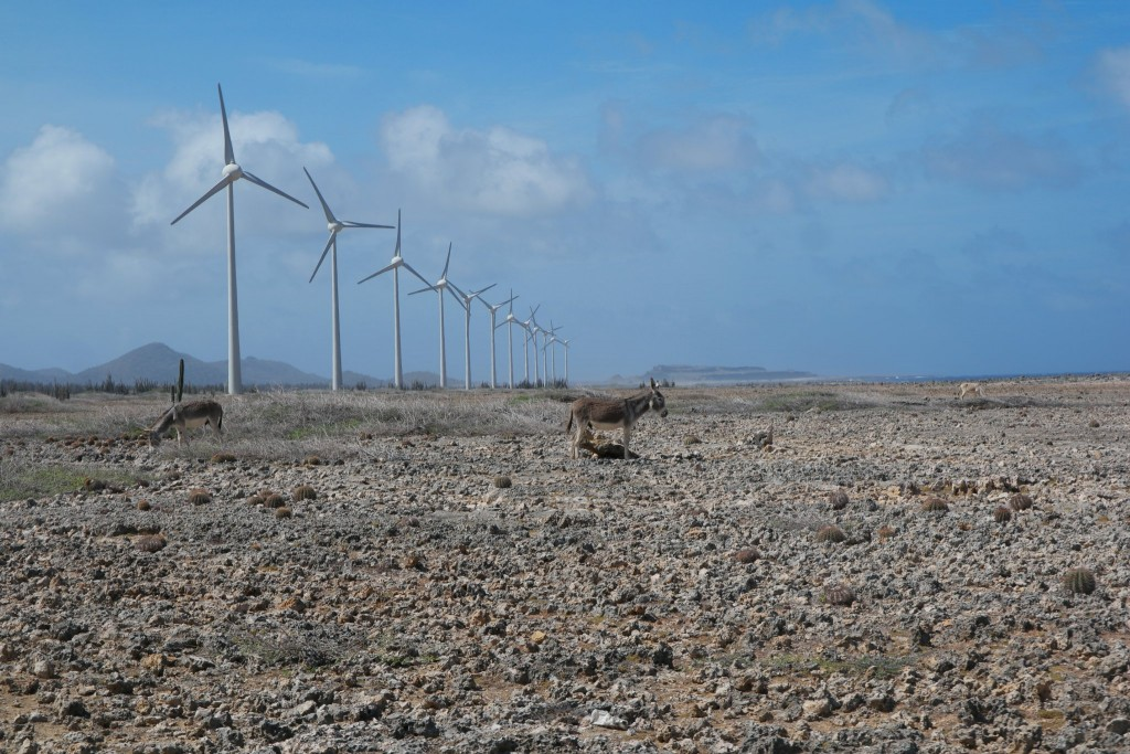 Bonaire Tour Carnival Sunshine Cruise_Donkeys and Wind Turbines on the Beach