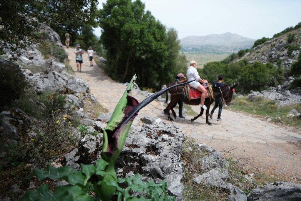 Cruise Port Review Heraklion Crete Greece Birthplace of Zeus