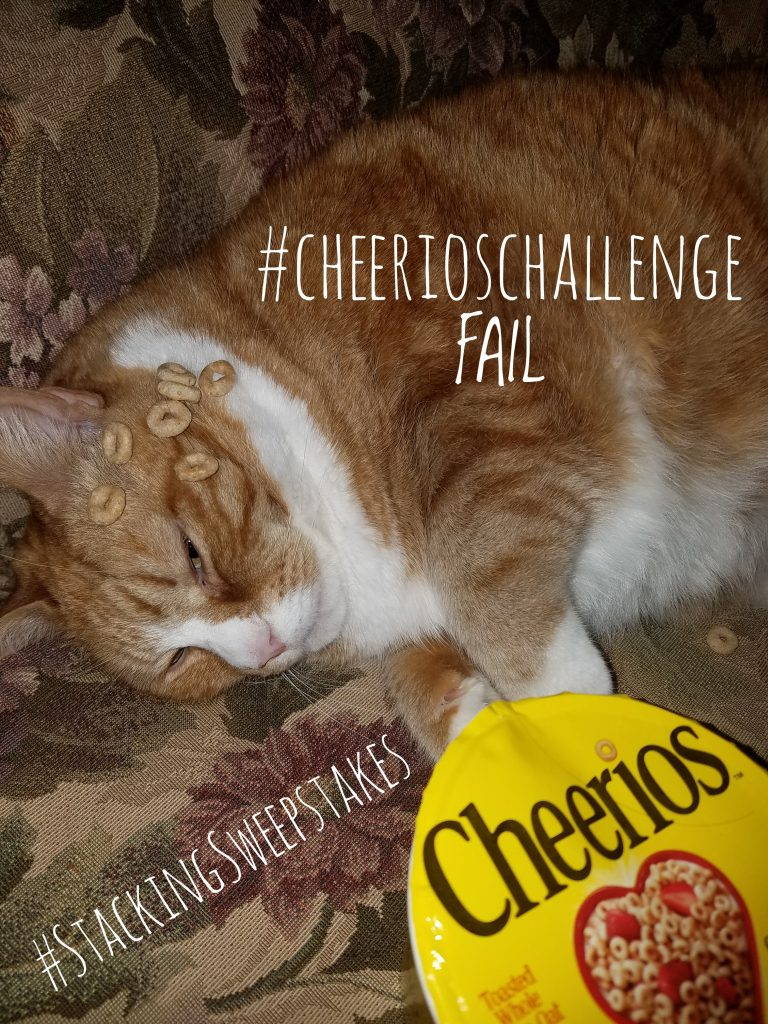 CheerioChallenge Life of Dad_Jeff Bogle OWTK_tabby cat fail