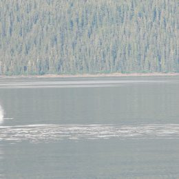 Best Alaska Carnival Cruise Excursion humpback whales breaching