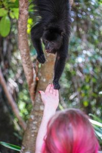 Belize Travel Story Howler Monkey Excursion