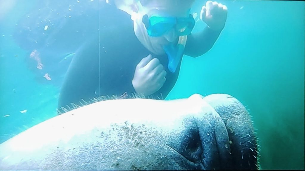 What it feels like to swim with manatees