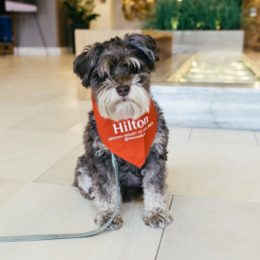 The Best Dog-Friendly Hotels in America